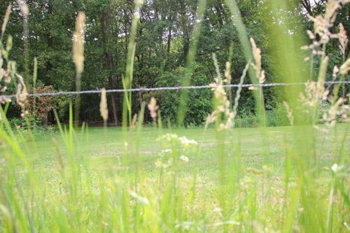 PferdWiese IMG_9333-01